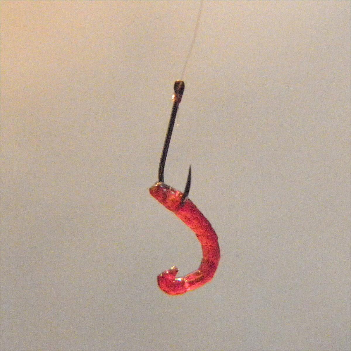 larwa ochotki na haczyku