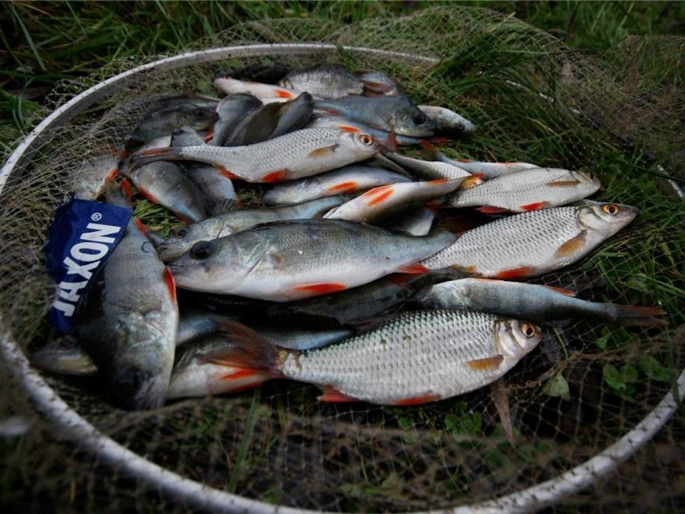 www.leszcz.pl - Zimowe zawody na jeziorze Rogozińskim