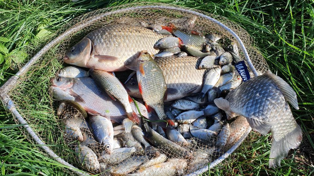 Ryby z Miejskiej Górki