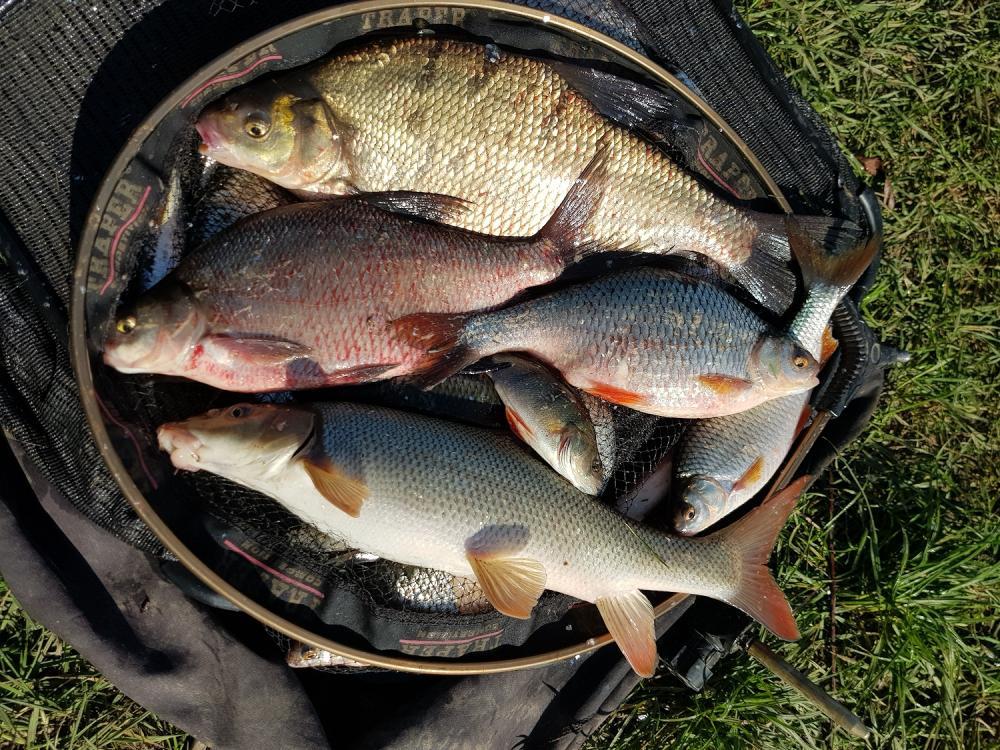 Ryby z Wisły w Tyńcu